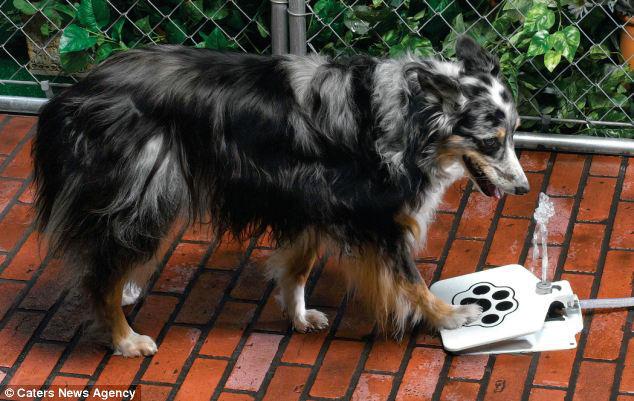 fuente agua perro