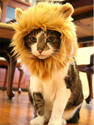 gorro león para gato