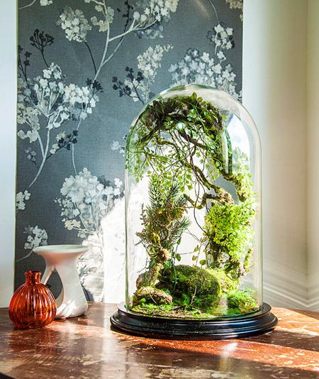 terrario decoracion plantas