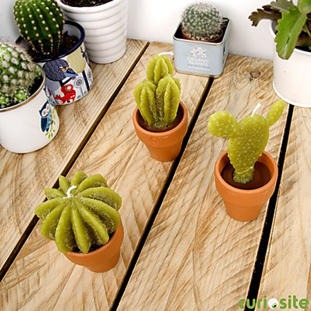 velas cactus pequeñas