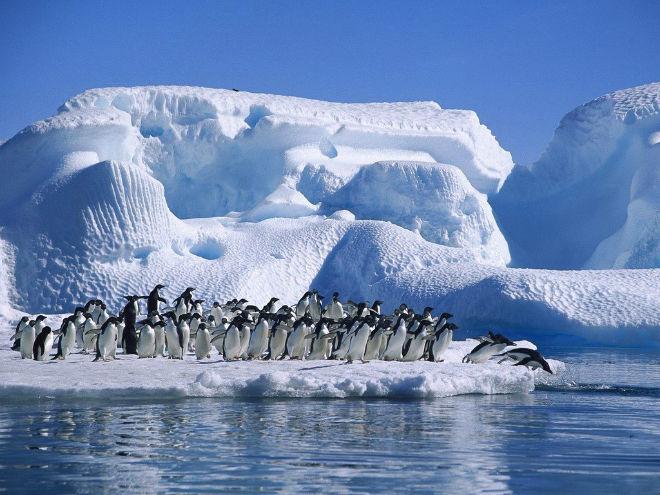 Antartida-deescandalo