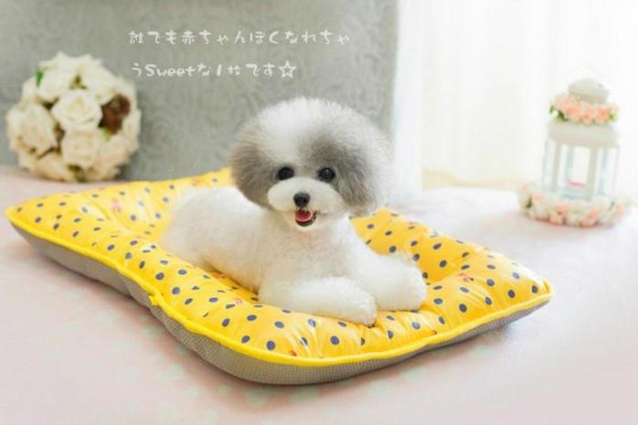 colchoneta perro verano