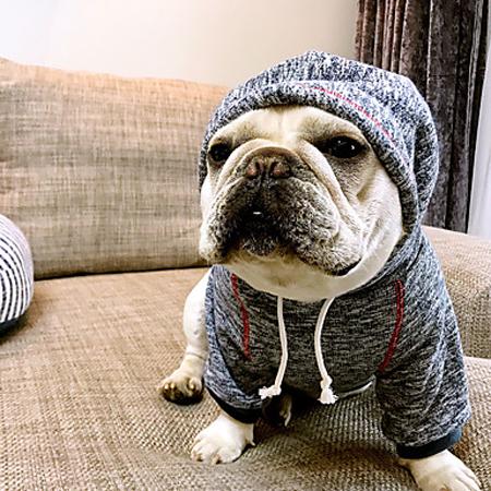 vestido perro