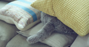 Qoobo, un gato robot falso que menea su cola