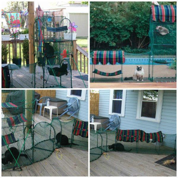 gatos terraza