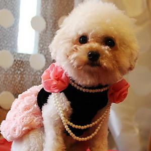 vestido perro rosas perlas