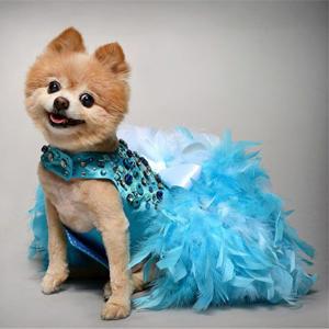 Vestido arnés perro lujo
